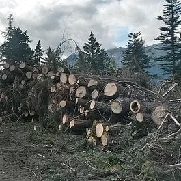 Piazzale di deposito legname