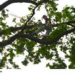 BaumWick Baumpflege
