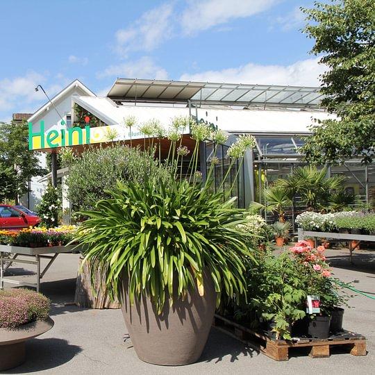 Heini Pflanzenhaus Eingang