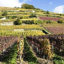 Badan Vins Didier et Anick Badan
