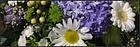 Blumen Galliker