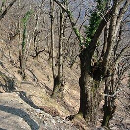 Recupero selva Castanile