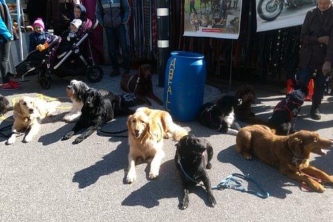 Erziehungskurse für Familienhunde in Theorie und Praxis