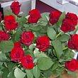 Rose rouges prix dès 6.- / 8.- pièce  jours de fêtes 10.- à 12.- pièce
