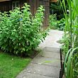 U. Widmer Gartenpflege & Garte