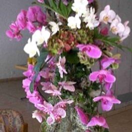 Blumen Jakob