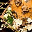 Blumen, Bestatter Gerber AG, Olten