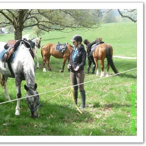 Centre Equestre le Foncet