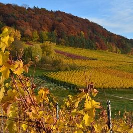 Herbst im Tegerfelder Rebberg