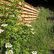 Naturgarten - naturnaher Sichtschutz