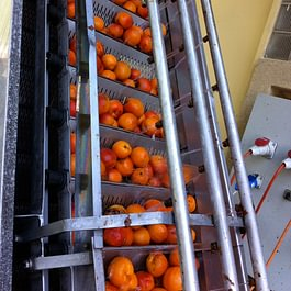 l'Abricot au lavage à l'eau chaude