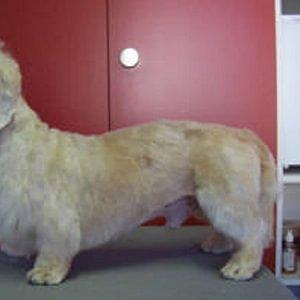 Billy nachher - Hundesalon Dany St. Gallen