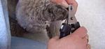 Krallen: Kontrolle und Pflege für guten Lauf des Hundes