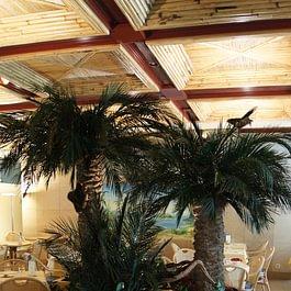 Palmiers du restaurant