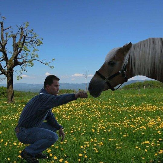 Human Horse Balance