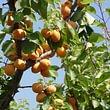 MBlondel l'esprit du fruit - Crissier