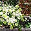 Blüten und Blatt GmbH