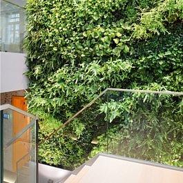 Verticalis BIG Pflanzenwand automatisch bewässert