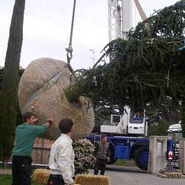 Plantation / gros spécimen