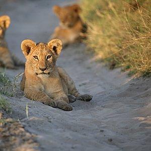 Terres Sauvages SA