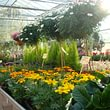 Galley fleurs