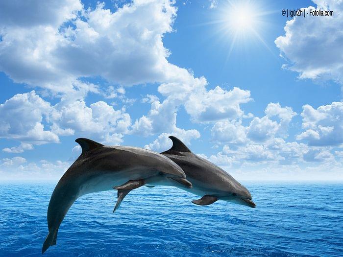 Delfine | Naturheilkunde Schröder | Luzern