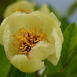 Blumen erlenbach