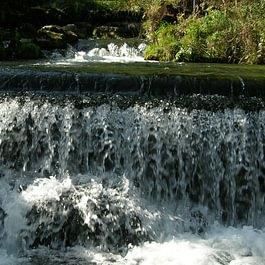 Source de la Neirivue alimentant la pisciculture