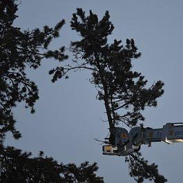 Baum fällen mit Fällmaschine