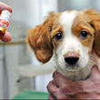 Tierarztpraxis Mahncke