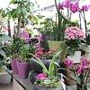 Zimmerpflanzen/ Hydropflanzen