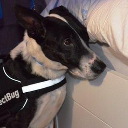 Patty, notre chien detecteur de Punaises de lit