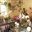 Blueme Corona, das kreative Blumengeschäft in Wetzikon