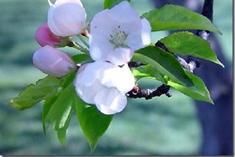 Thérapeute en Fleurs de Bach,  Formation cycle 2 ASCA
