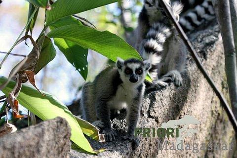 Madagaskar und Komoren - Kombireise 2020