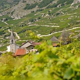 Cave Chantevigne - Raphaël Vergère Domaine