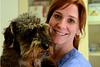 VetQi acupuncture vétérinaire