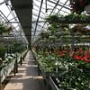 Senn Blumen AG - Binningen