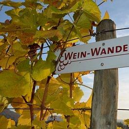 Weinwanderweg Endingen-Döttingen