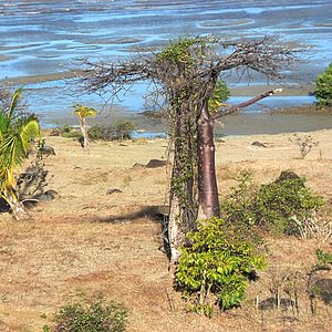 Wir von der PRIORI sind seit 1994 in Madagaskar.