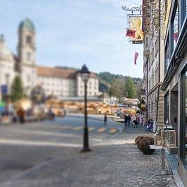Bären by Schefer
