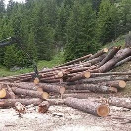 Lavorazione legname su piazzale