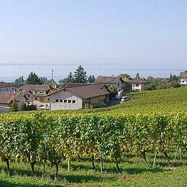 Domaine Saint-Sébaste, Saint-Blaise, vigneron encaveur