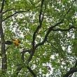 arbres et partenaires Sàrl