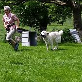 Vorzeigen mit Hund