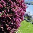 Hotel mit Garten - Ascona - Locarno - Tessin
