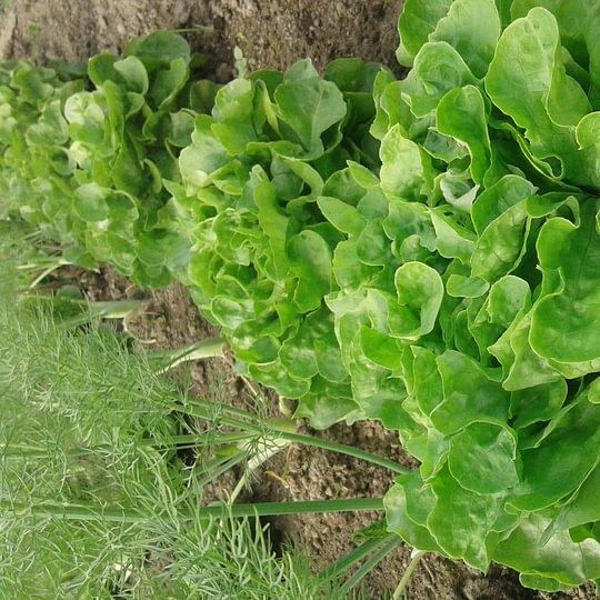 frische Salate direkt nach Hause geliefert,www.saisonbox.ch
