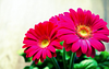 Blumen Finsterwald GmbH