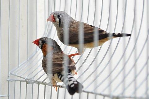 Tierbetreuung / Vögelhüten