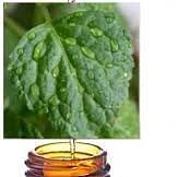Jojoba Gold Suisse - Patchouli l'huile essentielle BIO